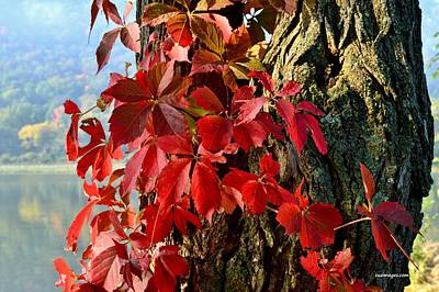 Virginia Creeper Art Print