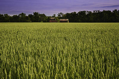 Photograph - Virginia Wheat Field by Bonnie Leigh Delar