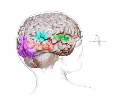 Vision And Sound Neurology Art Print