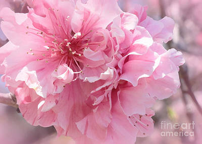 Photograph - Vision In Pink - Digital Painting by Carol Groenen