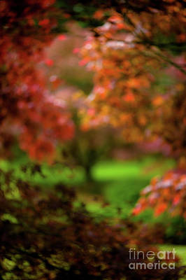 Visions Of Leaves Art Print