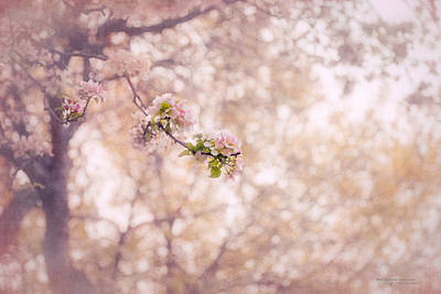 Kim Klassen Texture Photograph - Visions Of Spring by Dustin Abbott