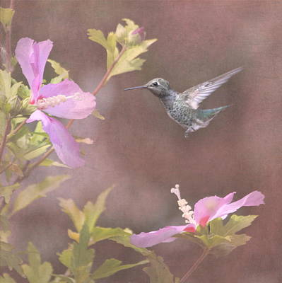 Tiny Bird Photograph - Visitor In The Rose Of Sharon by Angie Vogel