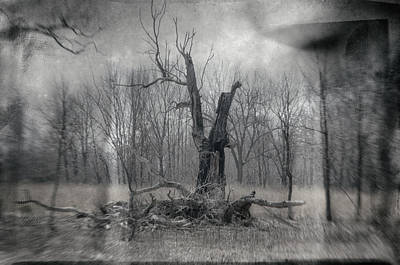 Photograph - Visitor In The Woods by Jim Shackett