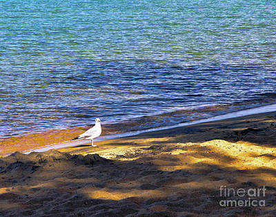 Photograph - Visitor - Lake Tahoe by John Waclo