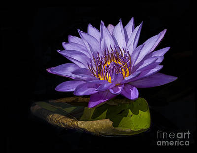 Photograph - Visitor To The Water Lily by Roman Kurywczak