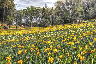 Photograph - Visitors On Daffodil Hill 2 by SC Heffner