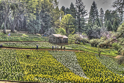 Photograph - Visitors On Daffodil Hill by SC Heffner