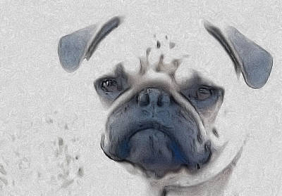 Vito Art Print by Cindy Luelling