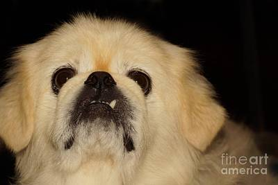 Photograph - Vito by Lynda Dawson-Youngclaus