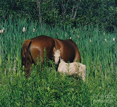Paso Fino Photograph - Viva Zapata Contratercero And Her Dam Calista by Patricia Keller