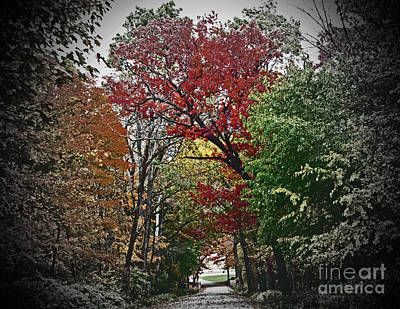 Chris Walter Rock N Roll - Vivid Autumn Lane Tunnel Vision by Minding My  Visions by Adri and Ray