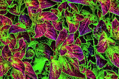 Photograph - Vivid Colors Of Nature by Steven Llorca