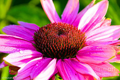 Photograph - Vivid Cone Flower by Susan Herber