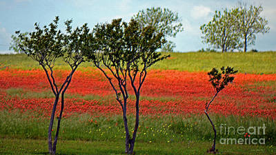 Photograph - Vivid Orange On Texas Hillside by Connie Fox