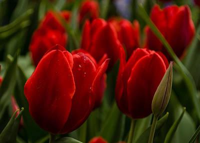 Ruby Garden Jewel Photograph - Vivid Red Tulip Garden by Georgia Mizuleva