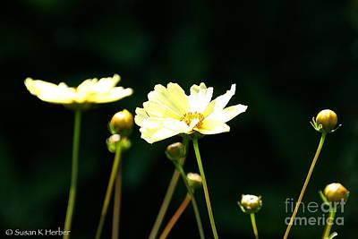 Photograph - Vivid Spring by Susan Herber