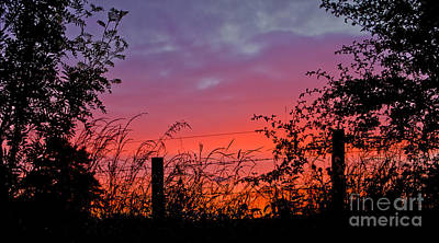 Photograph - Vivid Sunset by Liz  Alderdice