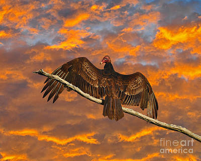 Vivid Vulture Art Print by Al Powell Photography USA