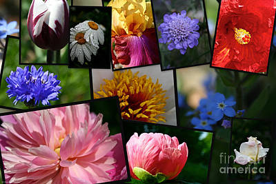 Photograph - Vividly Floral by Susan Herber