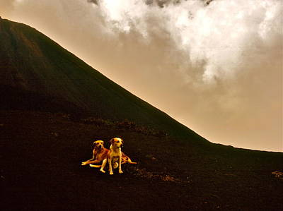 Photograph - Volcano Dogs by David Flitman