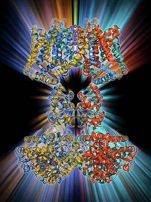 Molecular Structure Photograph - Voltage-gated Potassium Channel by Laguna Design