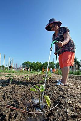 Gleaners Photograph - Volunteer In A Community Garden by Jim West