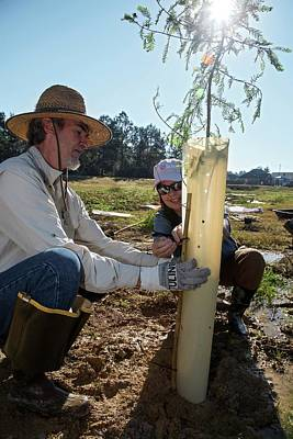Runoff Photograph - Volunteers Planting Trees by Jim West