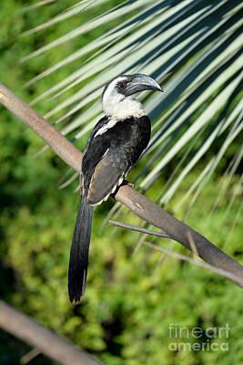 Hornbill Photograph - Von Den Decker's Hornbill by George Atsametakis
