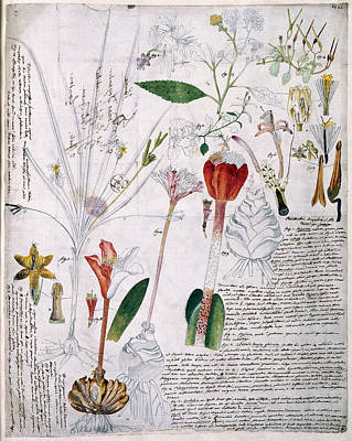 Von Jacquin Botanical Notes Art Print by Natural History Museum, London
