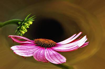 Flower Photograph - Vortex by Steve Harrington