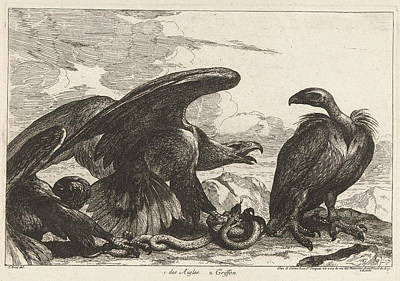Vulture Drawing - Vulture And An Eagle With Snake, Grard Scotin by G?rard Scotin (i)