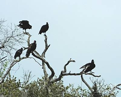 Photograph - Vulture Club by Lizi Beard-Ward