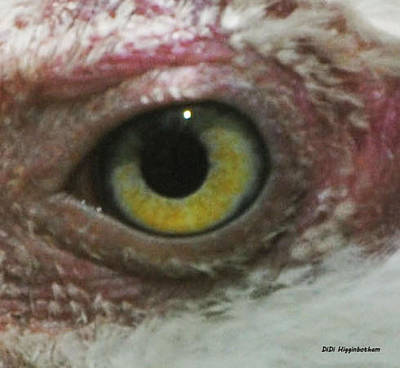 Photograph - Vulture Eye by DiDi Higginbotham