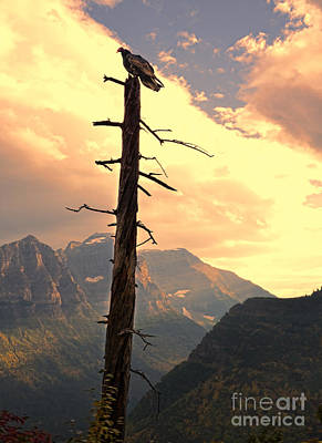 Photograph - Vulture In A Dead Tree  by Jill Battaglia