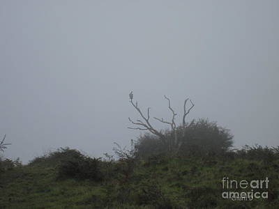 Photograph - Vulture In The Fog by Chani Demuijlder
