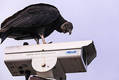 Vulture On Surveillance Camera Art Print