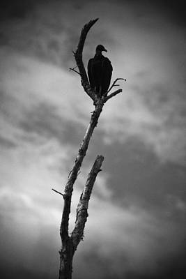 Photograph - Vulture Silhouette by Bradley R Youngberg