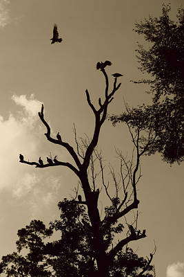 Photograph - Vulture Tree by Nina Fosdick