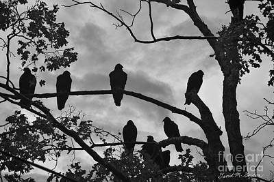 Buzzard Photograph - Vultures And Cloudy Sky Bw by Dave Gordon