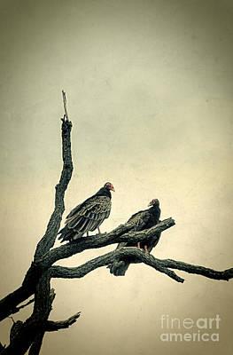 Photograph - Vultures by Jill Battaglia