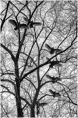 Black Photograph - Seven Vultures by Louis Dallara