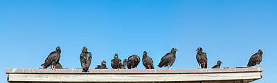 Flock Of Bird Photograph - Vultures On Anhinga Trail, Everglades by Panoramic Images