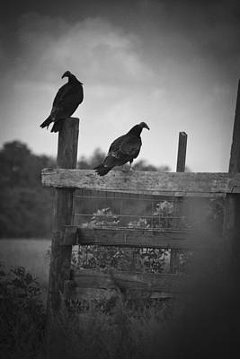 Vultures On Fence Art Print by Bradley R Youngberg