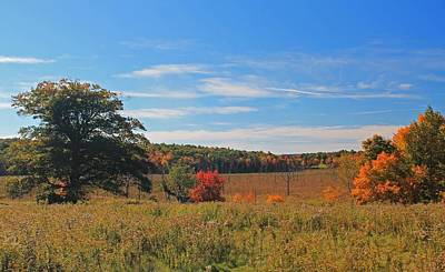 Photograph - Wachusett Meadows 7 by Michael Saunders