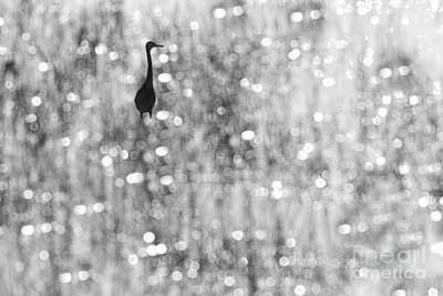 Photograph - Wading Bird In Marsh by Dan Friend