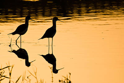 Photograph - Wading Birds by Nila Newsom