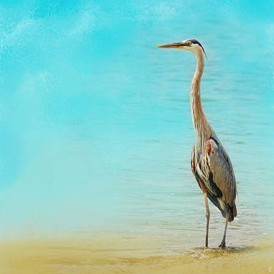 Photograph - Wading - Blue Heron - Wildlife by Jai Johnson
