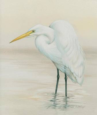 Egret Drawing - Wading Patiently by Heather Mitchell
