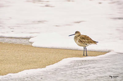 Photograph - Wading Willet by Peg Runyan